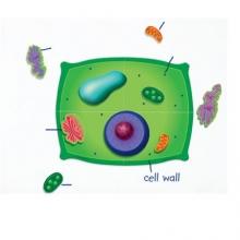 Célula vegetal magnética