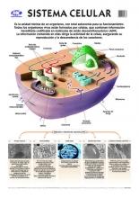 La célula/Glándula