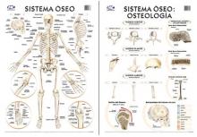 Sistema Óseo/Osteología