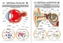 Visual/auditivo 50 x 70 cm